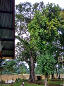 Durian Tree Base Camp