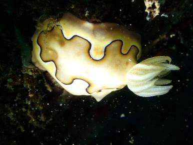 diving tenggol 2018 04 pt 3 of 3 wata malaysian oil and gas